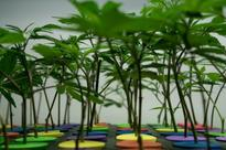 Staid US credit unions smell profits in pot industry