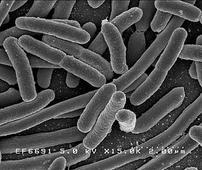 World's First Gut Flora Study Reveals Links Between Lifestyle And Gut Flora