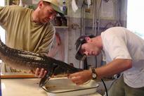 New Oneida Lake book sweeps across research panorama