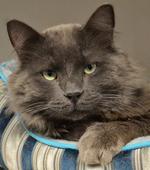 Thunder Bay humane society investigators still probing cat cases