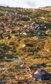 Freak lightning bolts kill 300 reindeer in Norway