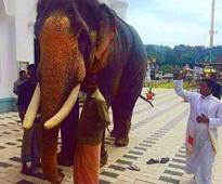 Elephant gets 'blessed' in a Kottayam church
