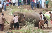 Thousands flee as circus elephant runs amok in India