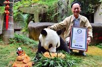 World's oldest living panda in captivity celebrates 37th birthday