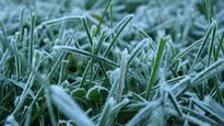 Frost warning: Temperature to dip below freezing in Hamilton