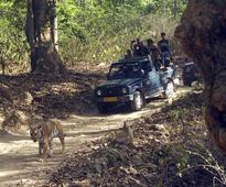 Tiger tourism is an amazing experience. It just needs proper monitoring
