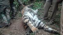DFO Conducts Inquiry on the Death of Tiger at Kodaikanal