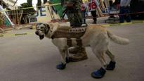 Meet Frida: The rescue dog who emerged as hero of Mexican earthquake
