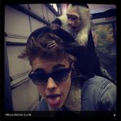 Germany Hands Justin Bieber Hefty Bill for Monkey Business