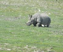 Poachers killed second rhino in past 7 days in Kaziranga