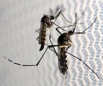 Zika infections in Puerto Rico increasing steadily: officials