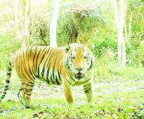 Kaziranga wins top tiger density status