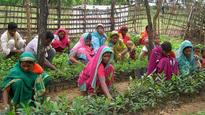 MP: These tribals are the saving grace of earth