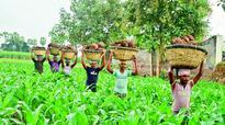 Loan waiver makes Delta farmers happy