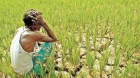 Kisan Ki Loot: PM Modi has failed farmers, they face Rs 2 lakh crore loss, says Yogendra Yadav