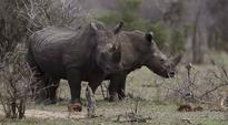 Carcass of rhino riddled with bullets recovered in Kaziranga
