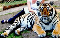 TripAdvisor supporting animal rights by not selling certain attractions