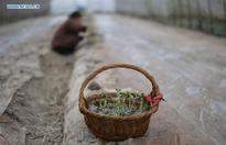 Farmers plant off-season fruits in China's Guizhou