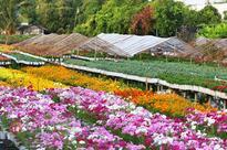Nearly 4.5 million flower baskets to serve Tet 2016