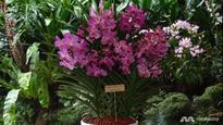 Orchid hybrid named in honour of Aung San Suu Kyi