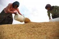 Officials Push for Restoration of Rice Reserves