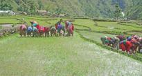 Locals hit hard as food crisis looms large in Bajura village