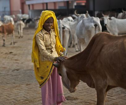 We protect our animals like kids, cow protectors need not worry: Gujjars