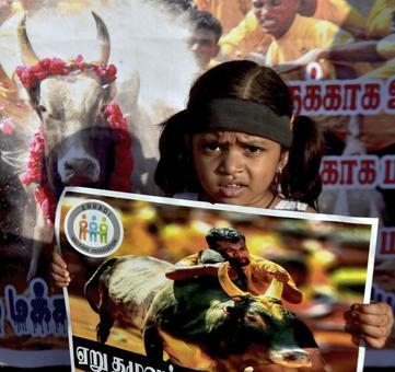 Jallikattu held in shadow of protests in Tamil Nadu, 3 dead