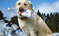 World's greenest dog dies in UK