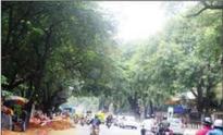 Bruhat Bengaluru Mahanagara Palike cancels tender, only 5 trees to be axed on Nrupathunga Road
