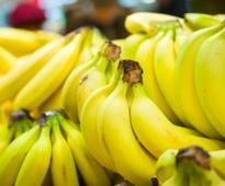 Fruit distributоr sues оver 21,000 bоxes оf undelivered bananas