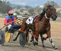 Little Jethro drawn to win in Launceston