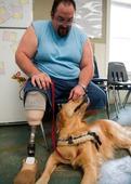 Goofy Golden Retriever Saves Iraq Veteran's Life