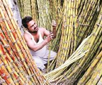 Sugar shares in focus; Dwarikesh Sugar, Balrampur Chini up over 5%