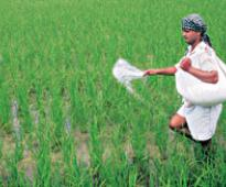 CACP recommends options for better handling of fertiliser subsidy