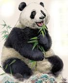 Pandas On The Rise, But Far From Safe