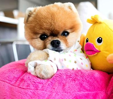 Chinese New Year: Meet the cutest dogs of Instagram in the Year of the Dog