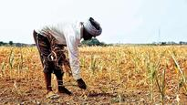Economic Survey has dire warning about shrinking farm income owing to climate change