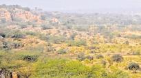 Javadekar to conduct aerial survey of Aravallis today