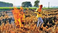Find solutions to stubble woes, says NGT