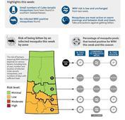 Mosquito counts rising in Regina; take precautions for West Nile