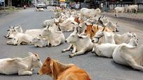 Laws banning cow slaughter adequate to maintain communal harmony; we can do without vigilantism