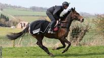 Steeplechaser Monbeg Dude is retired