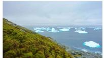 Antarctica 'greening' due to climate change: Study