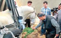 BJP worker waits for horse's luck