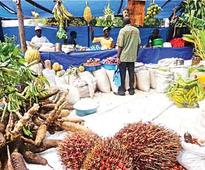 National Council on Agric opens in Kano