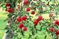 Uzbekistan created 9,700 hectares of intensive gardens