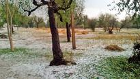 Hailstorm damages crop worth Rs 3135 crore in Maharashtra