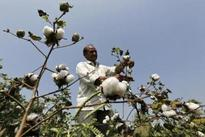 Cotton Association of India opposes creation of cotton buffer stock