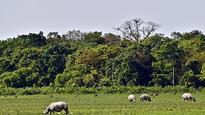 Kaziranga documentary row: NTCA bans BBC from filming in tiger reserves in India for 5 years